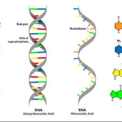 24对链条困扰着你?史上最全染色体核型检查说明【干货满满】ONE